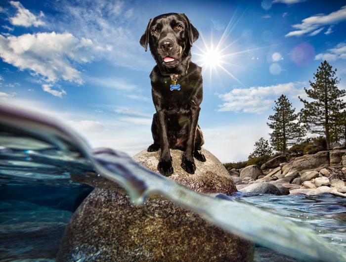 Foto de um cachorro em uma pedra
