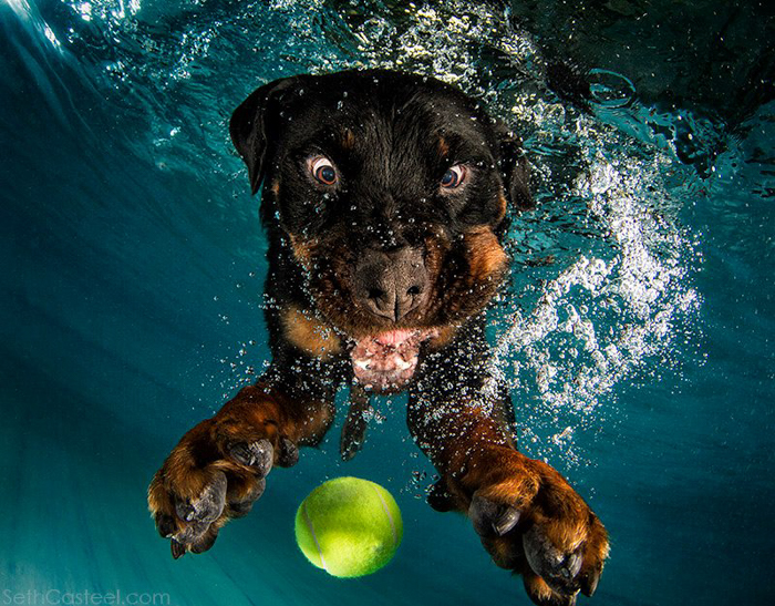 Funny pet photo of a dog underwater