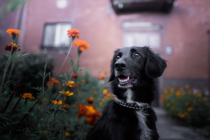 A cute dog with black fur in front of a vivid background