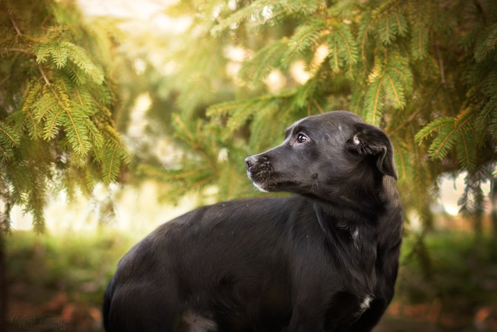 A cute black dog outdoors