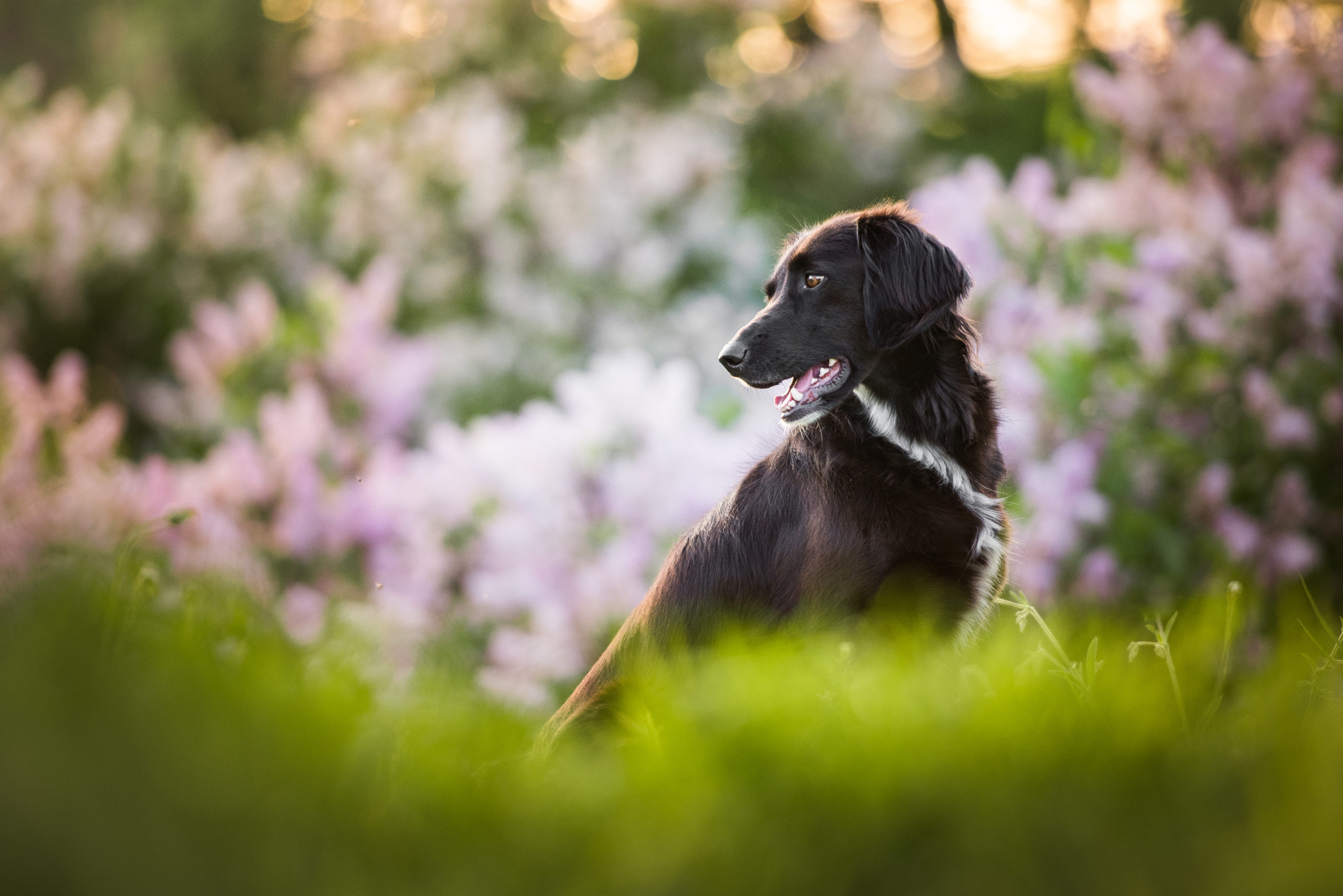 A cute black dog photographed in ambient light with strong bokeh.