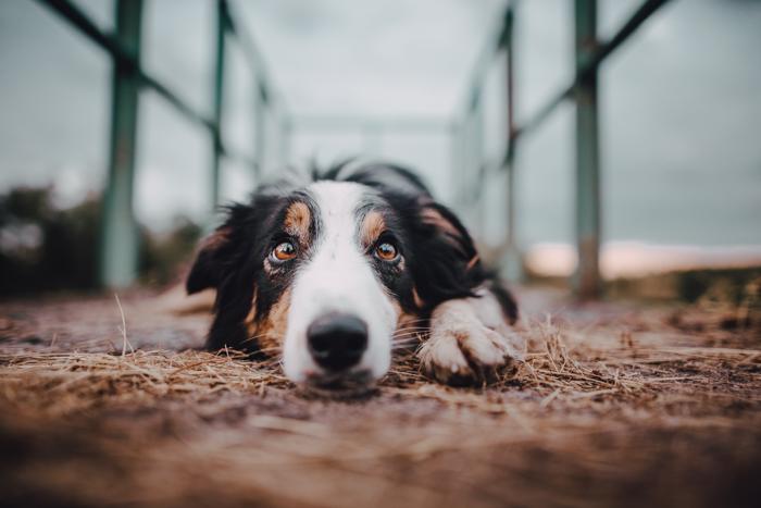 Pet portrait of a cute dog