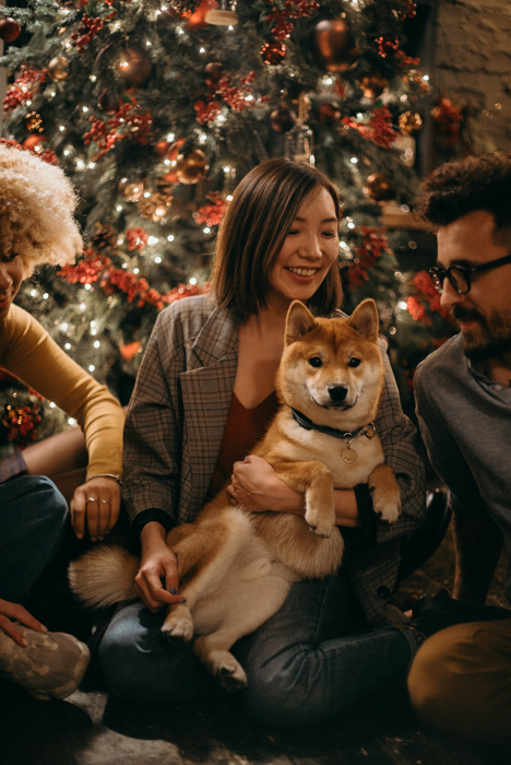 A family christmas portrait with dogs