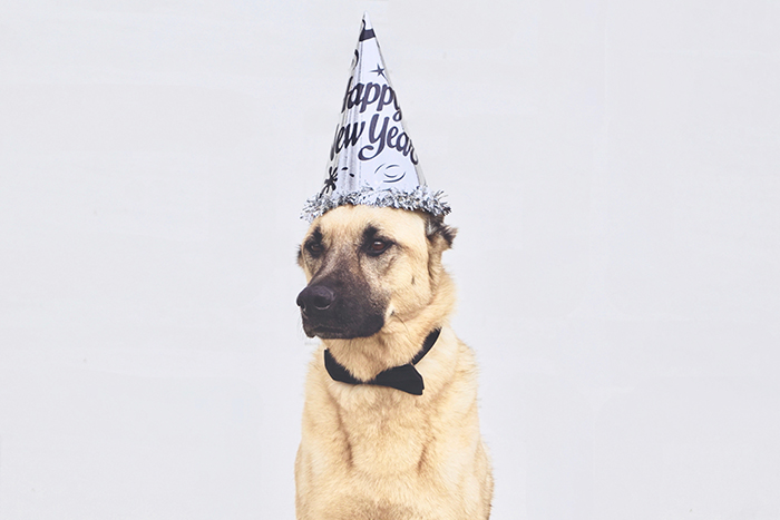Dog wearing a birthday hat behind a plain background