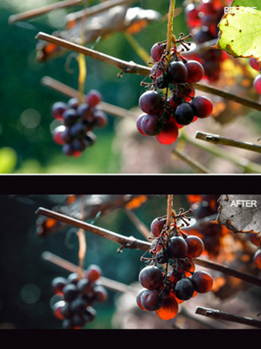 Diptych photo of grapes hanging from a tree, before and after Lightroom editing