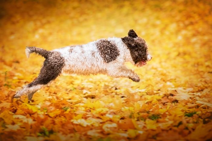 Retrato fofo de um cachorro preto e branco pulando
