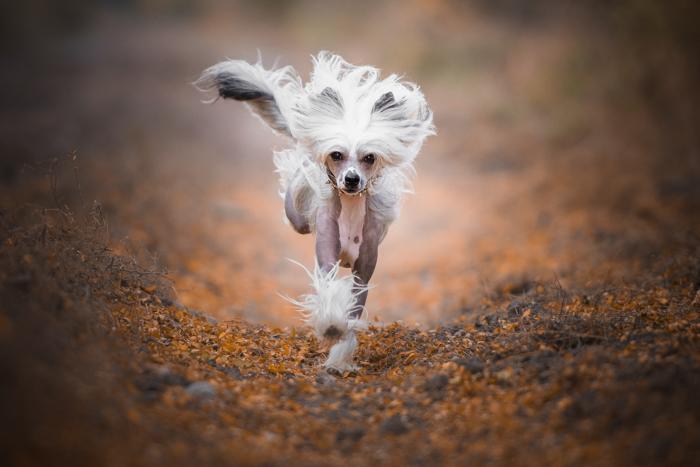 Um cachorro correndo