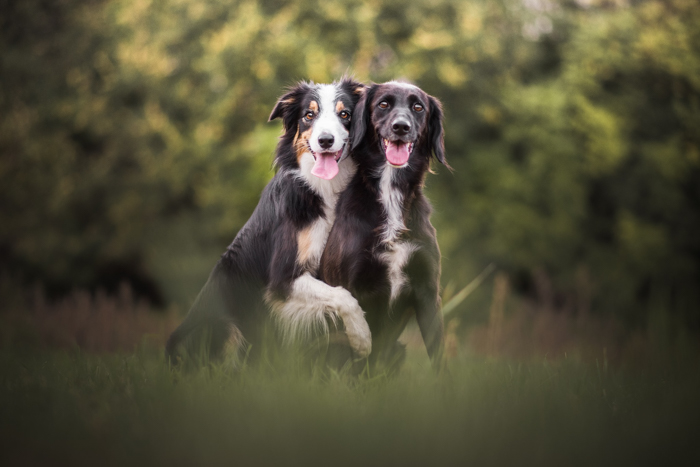 Retrato fofo de dois cachorros ao ar livre