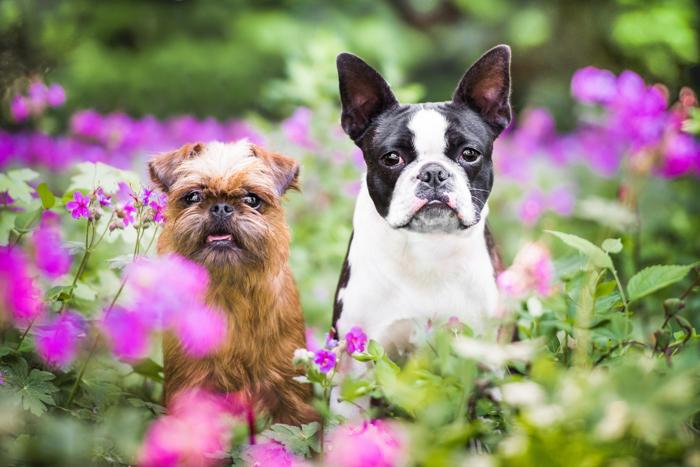 Fotografia fofa de dois cachorros ao ar livre entre flores