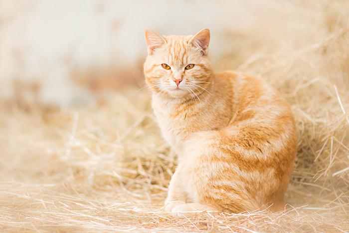 Retrato sonhador de um gato ruivo ao ar livre