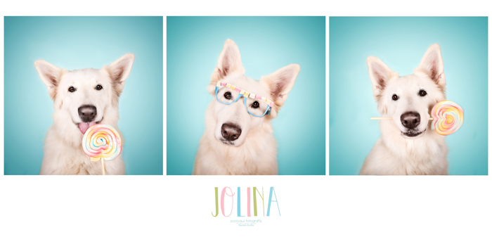 Triptych of a white dog with a lollipop