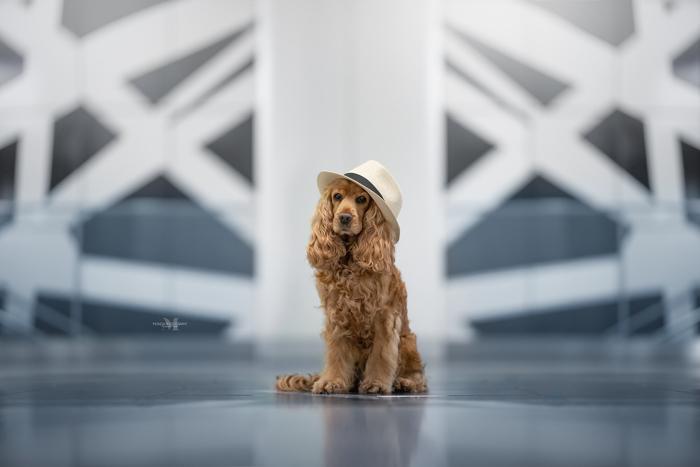 Um lindo cachorro marrom com um chapéu