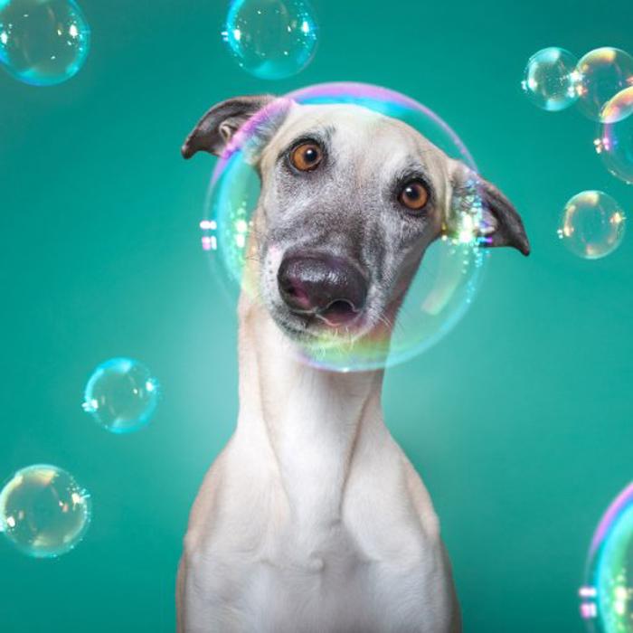 Um close up de um cachorro cercado por bolhas
