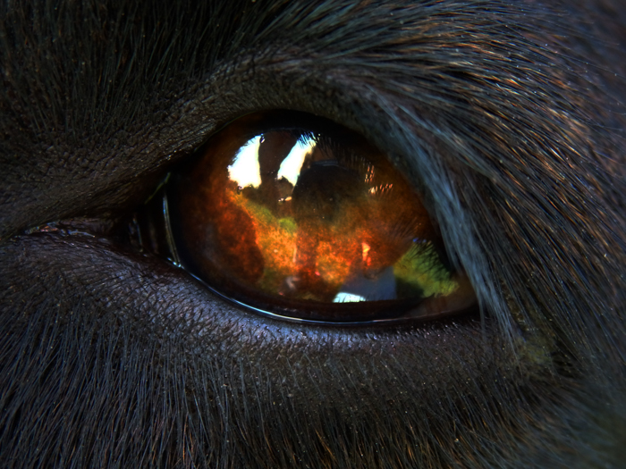 Close up de um olho de cavalo