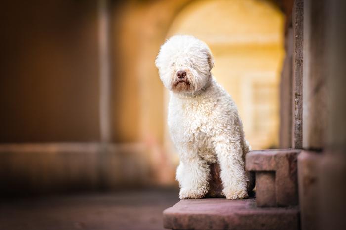 Fotografia fofa de um cachorro branco dentro de casa