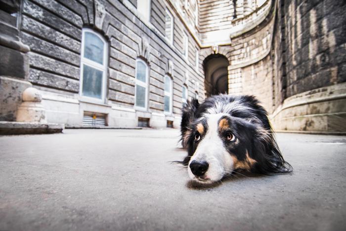 Fotografia fofa de um cachorro ao ar livre