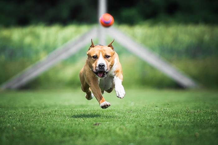 Fotografia fofa de um cachorro correndo