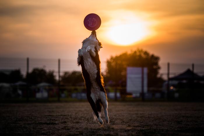 Retrato fofo de um cachorro pegando um frisbee