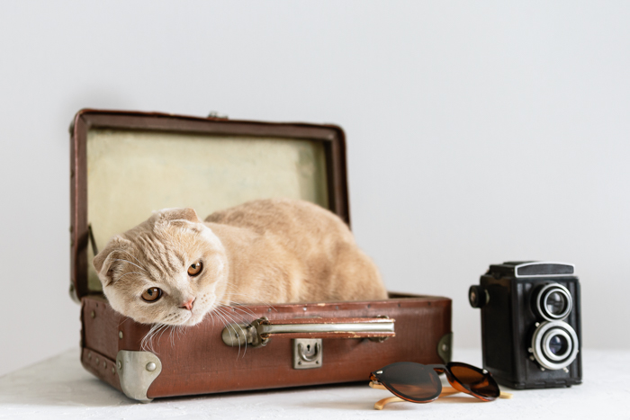 Retrato fofo de um gato relaxando em um estojo de câmera