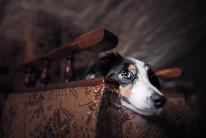 Fotografia fofa de um cachorro dentro de casa