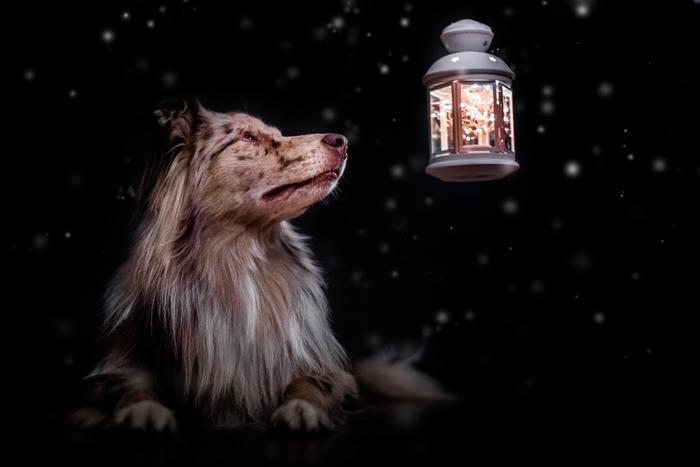 Fotografia fofa de um cachorro ao ar livre ao lado de uma lanterna