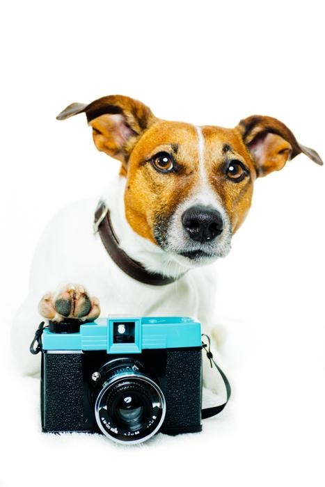 Retrato fofo de cachorro com uma câmera