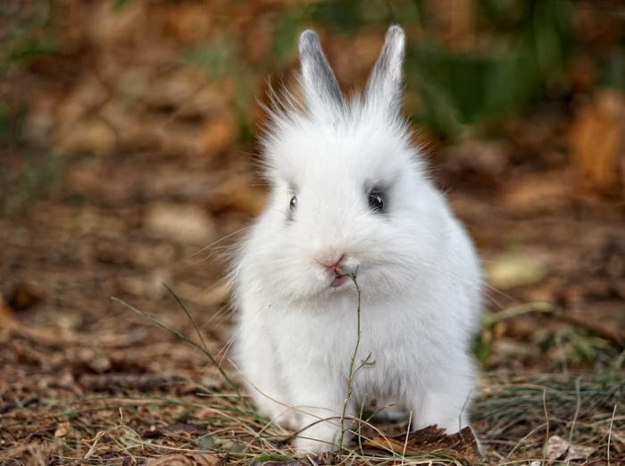 Fotografia de um animal de estimação fofo de um coelhinho branco e fofo