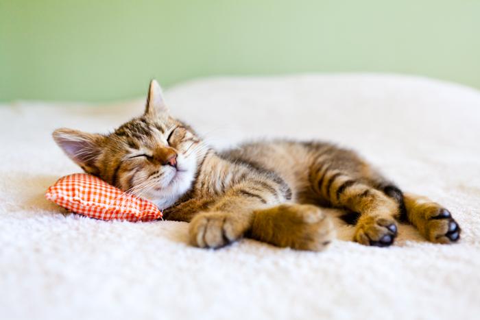 Cute pet portrait of a cat relaxing