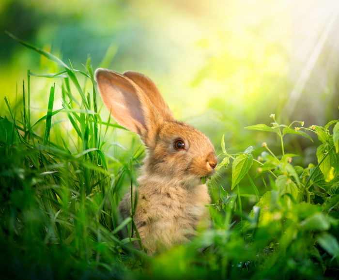 Cute pet photography of a rabbit outdoors