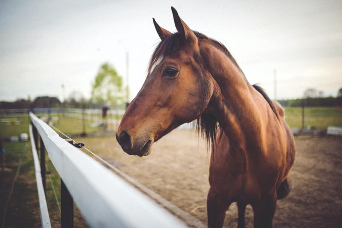 Um cavalo marrom em um campo.