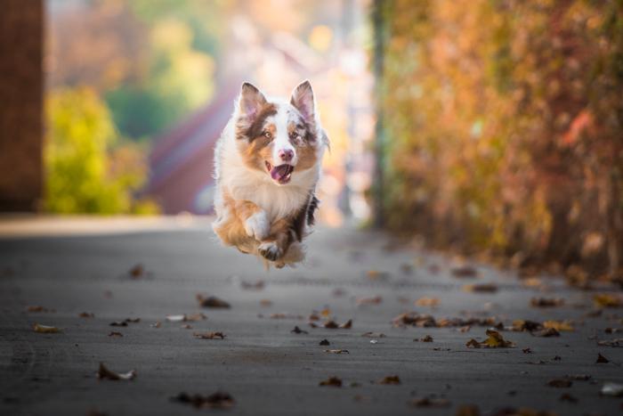 Foto fofa de um cachorro correndo