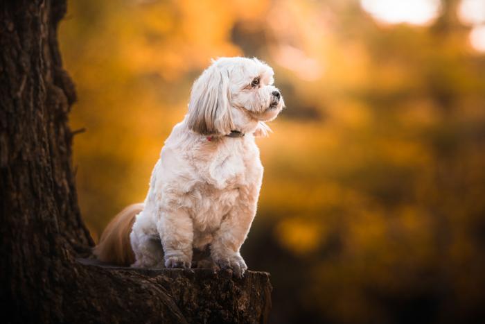 Um lindo cachorro branco no toco de uma árvore