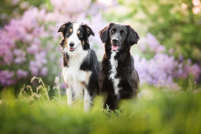 Dois cachorros fofos em um campo