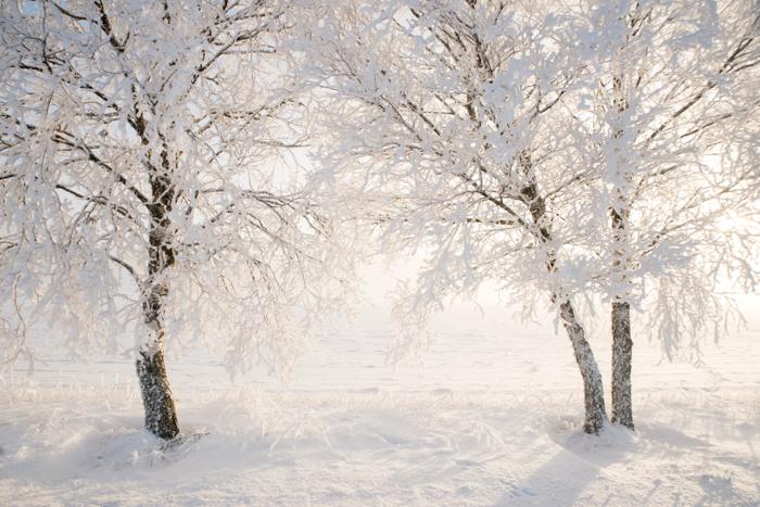Belas árvores cobertas de neve em uma paisagem de inverno