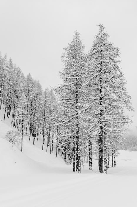 Cena de floresta com neve