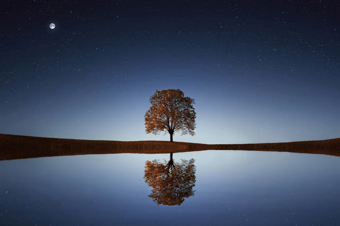 A minimalistic landscape photo shot at night featuring a tree, moon, and a pond.