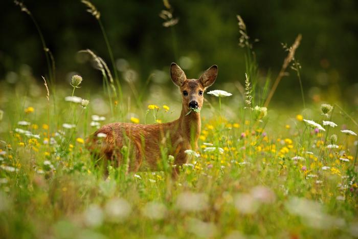 Um cervo em um prado.