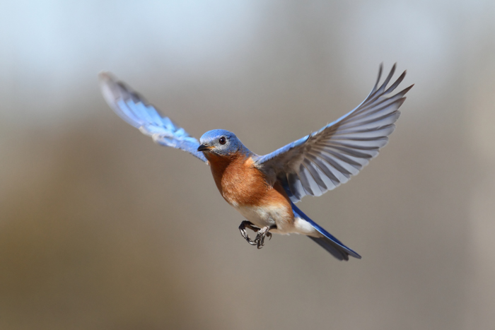 A bird in flight