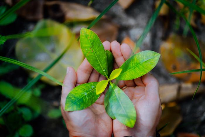 Uma imagem de um ambiente natural de folhas na palma da mão de uma mulher.