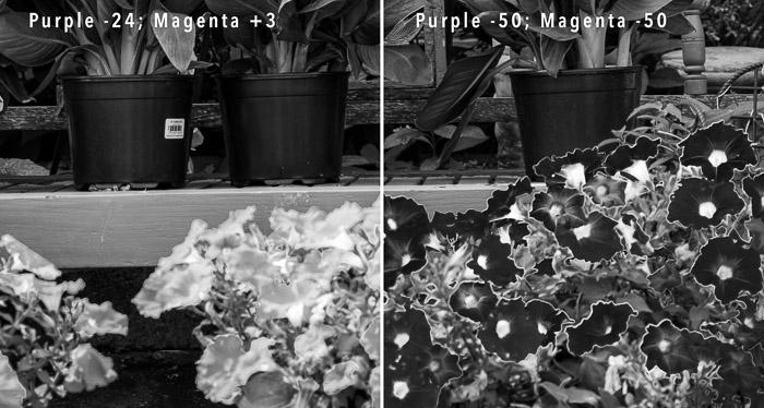 Duas fotos comparando flores com halo.