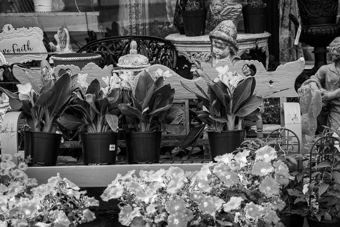 Centro de jardim de flores com fotografia monocromática