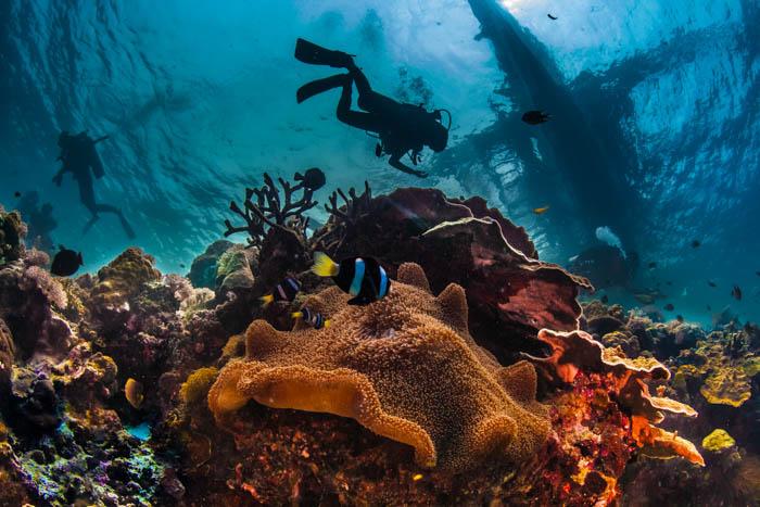 Fotografia subaquática de um mergulhador nas profundezas do mar cercado por criaturas mágicas.