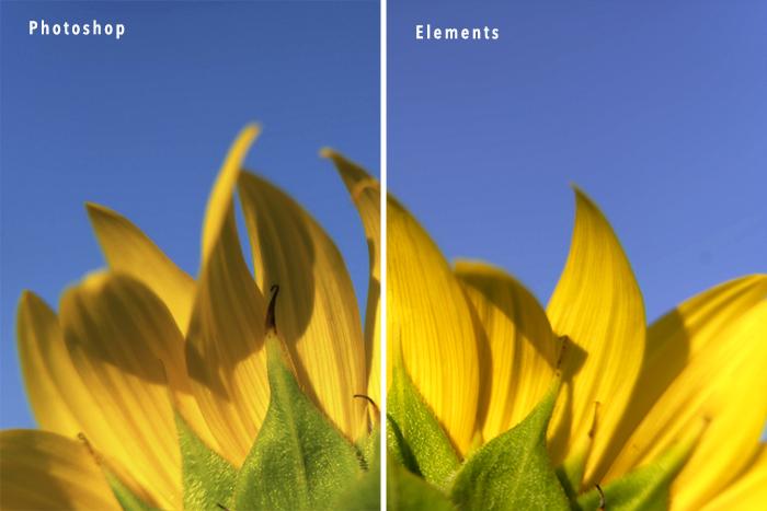 Sunflower compara as edições Photoshop e Photoshop Elements